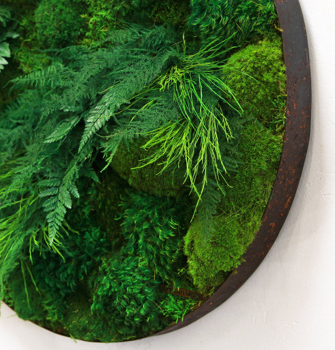 Moss and Ferns in 24