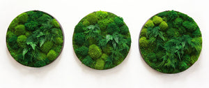 Round moss and fern wall artwork