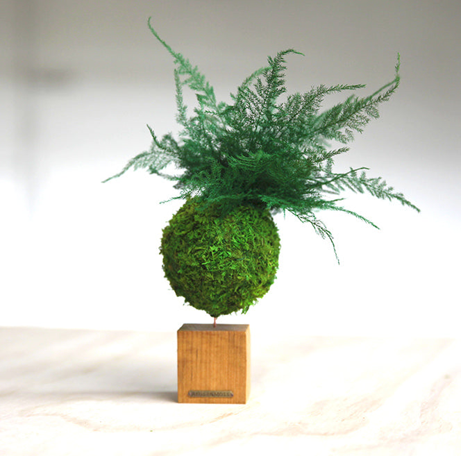 Fern & Moss Kokedama Natural Wooden Desk Cube