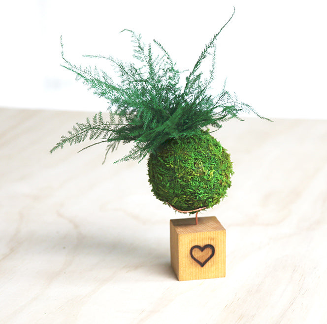 Fern & Moss Kokedama Heart Embellished Natural Wooden Desk Cube