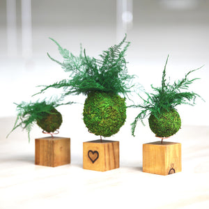 Heart Embellished Fern & Moss Kokedama Natural Wooden Desk Cubes