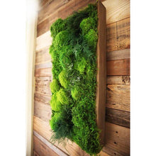 moss art with fern