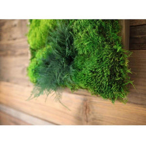 moss art with ferns 40x18