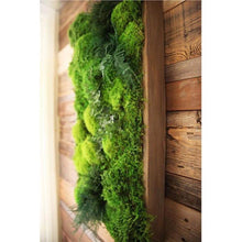 green moss art and ferns wood frame