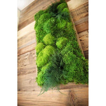 green moss art with ferns
