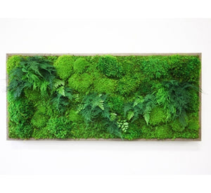 "framed moss and fern art 40""x18"""