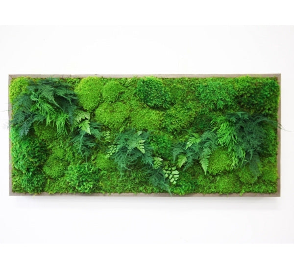 framed moss and fern art 40