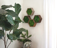 Modular Hexagons (single hex) 30 options to design your own wall
