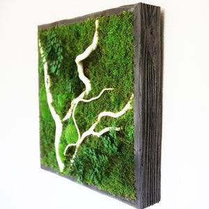 wood framed moss art with white branches