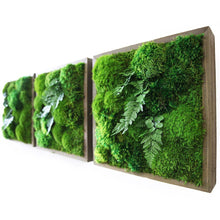 moss wall art with ferns