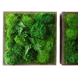 square framed moss art with ferns