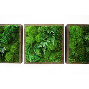 moss art with ferns 14x14