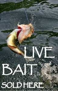 "Live Bait Sold Here- 28""w x 44""h 4mm Coroplast Insert"