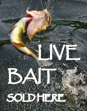"22""w x 28""h Insert- ""Live Bait Sold Here"""