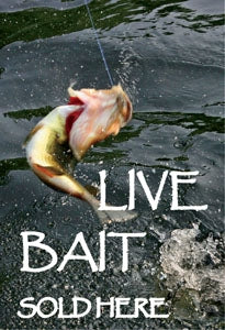 "Sqawker Insert- ""LIVE BAIT Sold Here"""