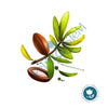 Argan Oil 100% Pure Organic  ~ cold pressed and unrefined ~ Argania Spinosa ~ Carrier Oil ~ for Essential Oils - Petal and Stem