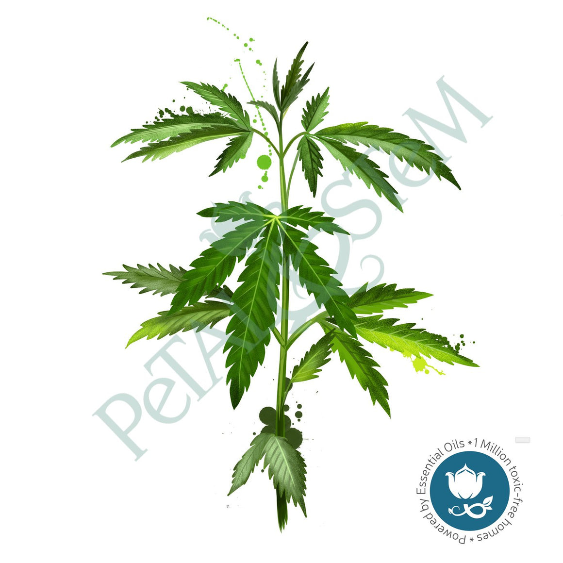 Hemp Seed Oil 100% Pure Organic ~ cold pressed and unrefined ~ Cannabis Sativa ~ Carrier Oil ~ for Essential Oils - Petal and Stem