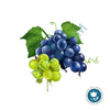 Grape Seed Oil 100% Pure Organic ~ cold pressed & unrefined ~ Vitis vinifera ~ Carrier Oil ~ for Essential Oils - Petal and Stem