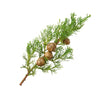 Cypress Essential Oil | Organic | 15g (17.44ml) - Petal and Stem