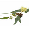 Eucalyptus Smithii Oil | Organic | 15g (16.67ml) - Petal and Stem