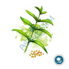 Sesame Oil 100% Pure Organic ~ cold pressed & unrefined ~ Sesamum indicum ~ Carrier Oil ~ for Essential Oils - Petal and Stem