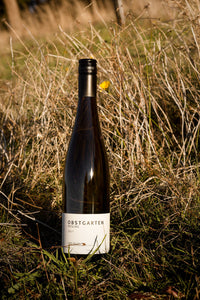 A tall bottle of Vignerons Schmölzer & Brown 'Obstgarten T' Riesling white wine in a vineyard.