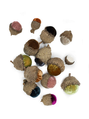Acorn Mix - XL Set of 6