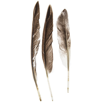 Smudging Feather, Duck Wing Quill