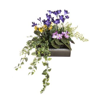 Garden Flowers Violets and Streptocarpus in Pot