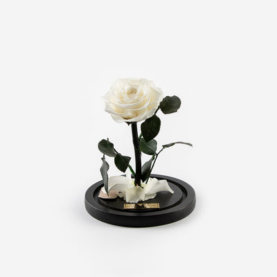 The Mini Timeless Rose - White