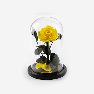 The Mini Timeless Rose - Yellow