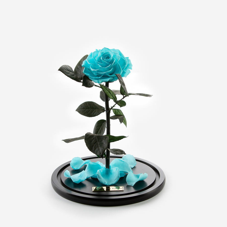 The Timeless Rose  - Mint Blue