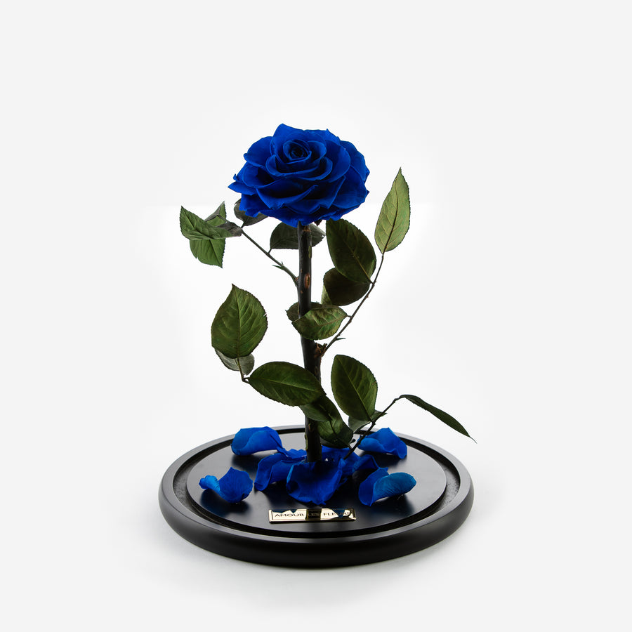 The Timeless Rose - Royal Blue