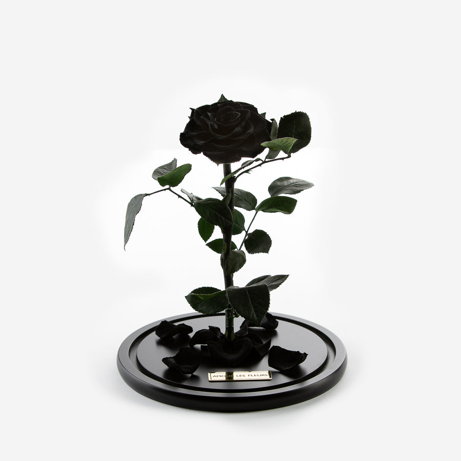 The Timeless Rose - Black