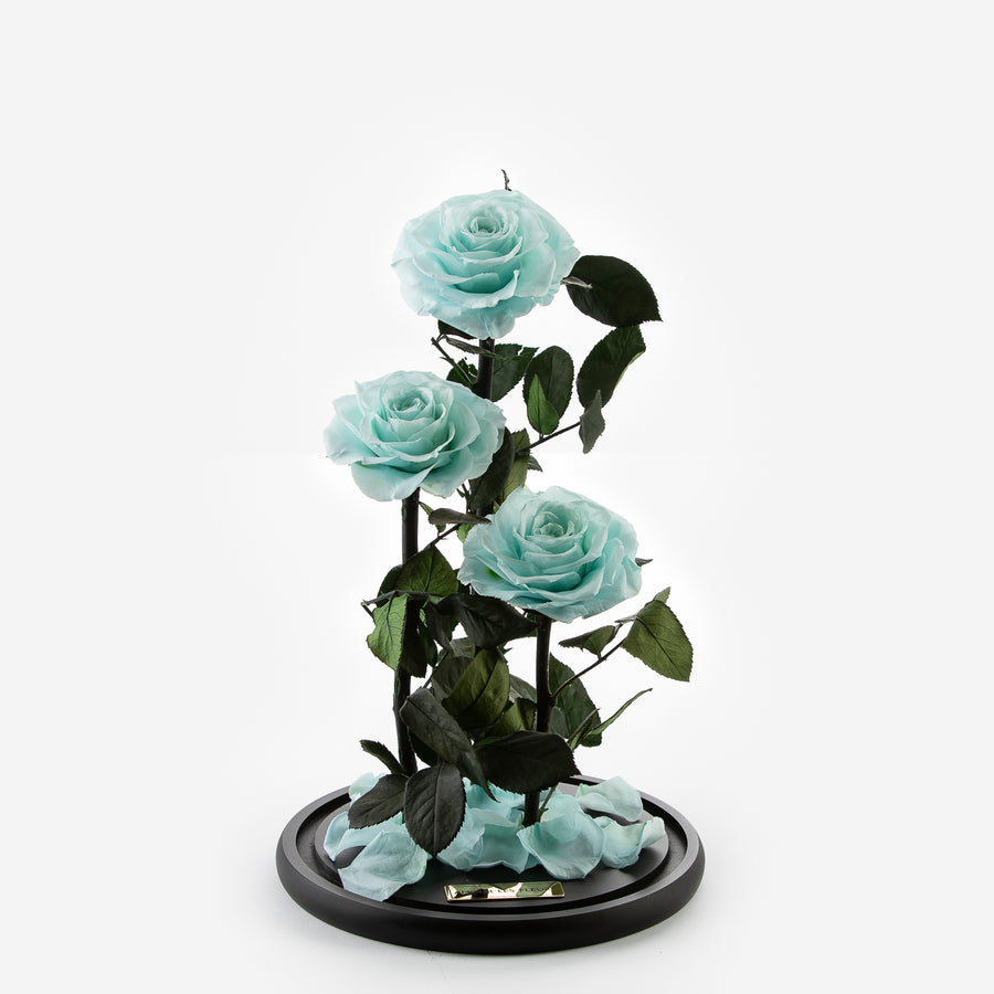 The Three Piece Timeless Rose - Sky Blue