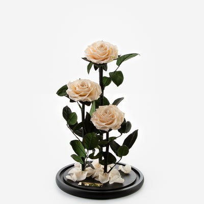 The Three Piece Timeless Rose - Champagne
