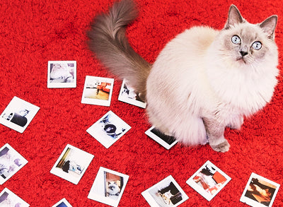 10 Tips to Capture your Pet's Cuteness with instax