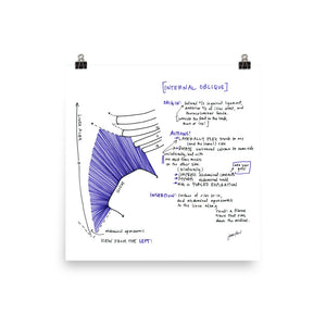 Internal Oblique Poster