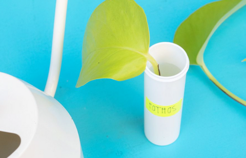 Place the plant in water in the Nuun tube
