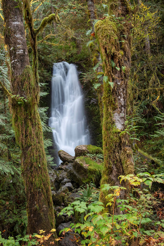 Merriman Falls - Quinault Rainforest, Olympic National Park.