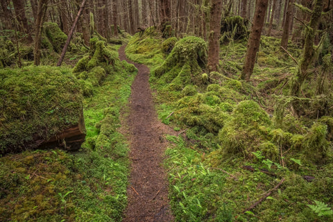 'Follow me' - Haida Gwaii/Queen Charlotte Islands, BC