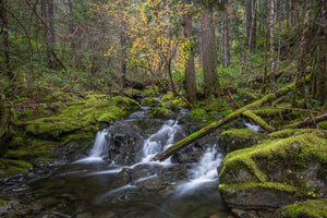 Mary Vine Creek, Sooke, BC