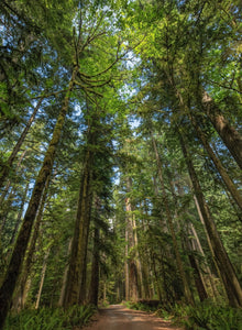 Cathedral Grove - Vancouver Island, BC