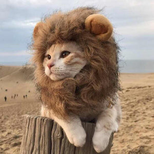 Turn your cat into a lion (after Christmas)