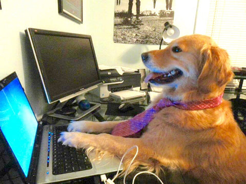 Dog at computer doing customer service.