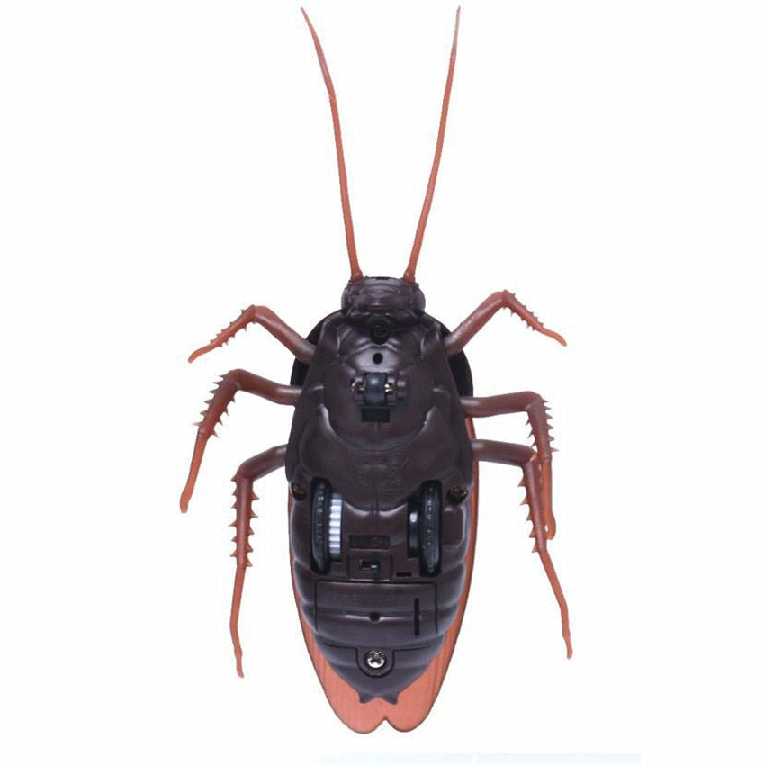 Buy Remote Control Cockroach Toy Trending - Xshopz