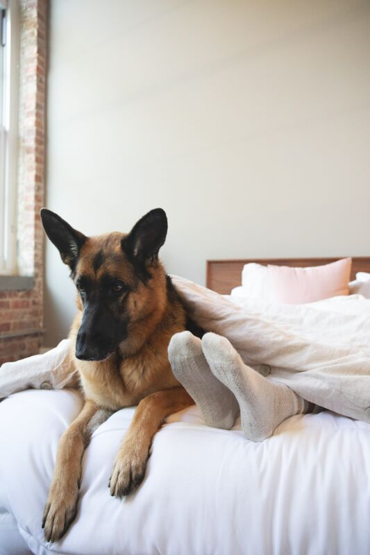The Pros and Cons to Sleeping with Your Pup