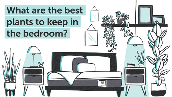 What are the Best Plants to Keep in Your Bedroom?