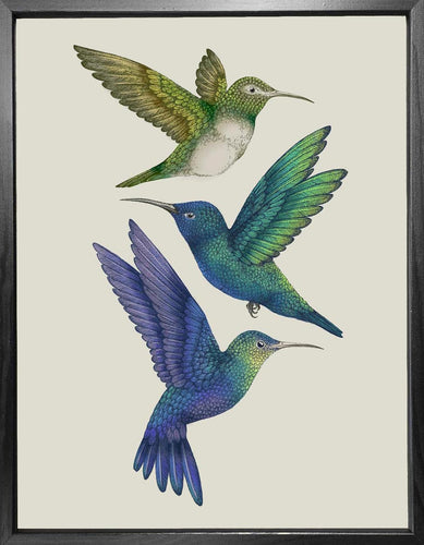 'Antique Hummingbirds II' Fine Art Print