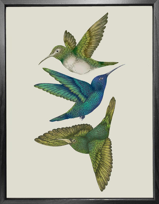 'Antique Hummingbirds III' Fine Art Print